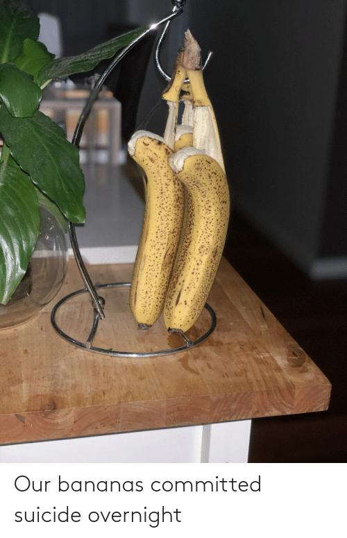 bananas: Our bananas committed suicide overnight
