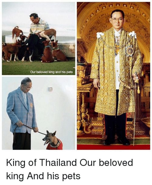 Memes, Pets, and Thailand: our beloved king and his pets King of Thailand  Our beloved king And his pets