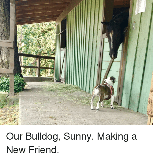 Bulldog, Friend, and Sunny