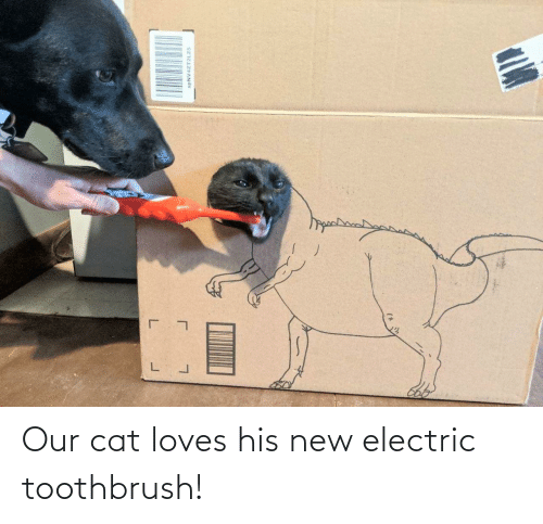Toothbrush: Our cat loves his new electric toothbrush!