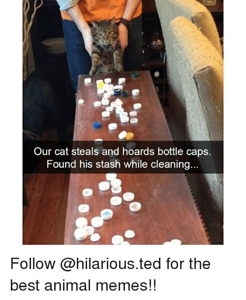 Animated Memes: Our cat steals and hoards bottle caps.  Found his stash while cleaning... Follow @hilarious.ted for the best animal memes!!