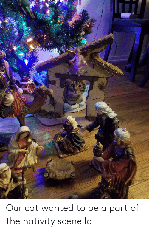 nativity: Our cat wanted to be a part of the nativity scene lol