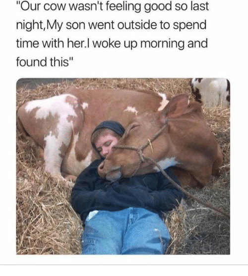 """feeling good: Our cow wasn't feeling good so last  night,My son went outside to spend  time with her.l woke up morning and  found this"""""""