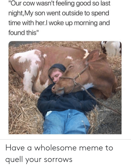 """feeling good: Our cow wasn't feeling good so last  night,My son went outside to spend  time with her.l woke up morning and  found this"""" Have a wholesome meme to quell your sorrows"""
