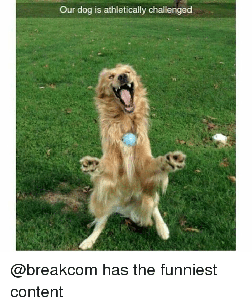 Funny, Content, and Dog: Our dog is athletically challenged @breakcom has the funniest content