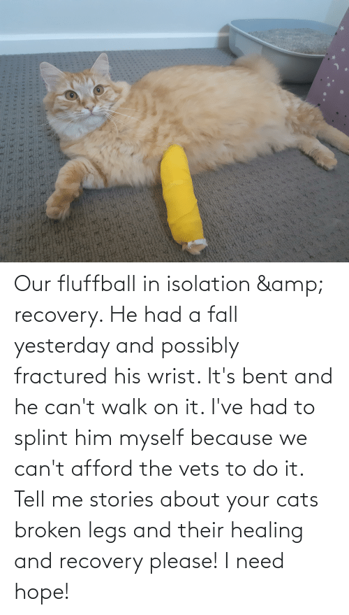 bent: Our fluffball in isolation & recovery. He had a fall yesterday and possibly fractured his wrist. It's bent and he can't walk on it. I've had to splint him myself because we can't afford the vets to do it. Tell me stories about your cats broken legs and their healing and recovery please! I need hope!