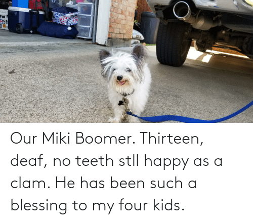 clam: Our Miki Boomer. Thirteen, deaf, no teeth stll happy as a clam. He has been such a blessing to my four kids.