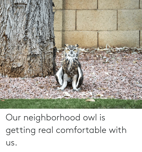 Our: Our neighborhood owl is getting real comfortable with us.