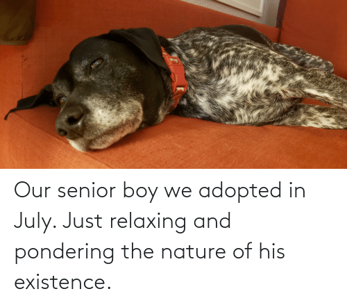 Just Relaxing: Our senior boy we adopted in July. Just relaxing and pondering the nature of his existence.