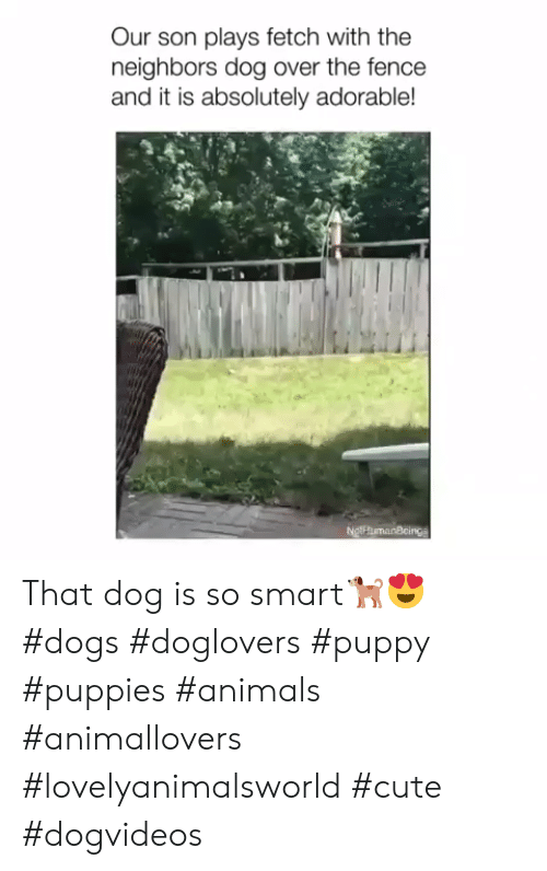 the neighbors: Our son plays fetch with the  neighbors dog over the fence  and it is absolutely adorable!  NgthumanBcings That dog is so smart🐕😍 #dogs #doglovers #puppy #puppies #animals #animallovers #lovelyanimalsworld #cute #dogvideos