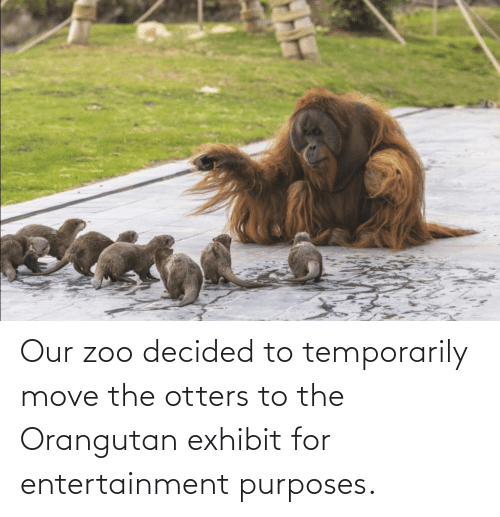 Otters: Our zoo decided to temporarily move the otters to the Orangutan exhibit for entertainment purposes.
