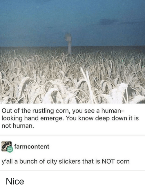 City Slickers: Out of the rustling corn, you see a human-  looking hand emerge. You know deep down it is  not human.  farmcontent  y'all a bunch of city slickers that is NOT corn Nice