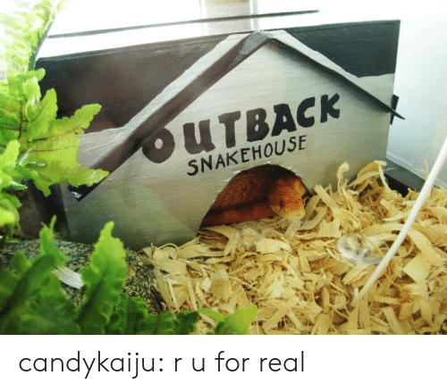 Outback: OUTBACK  SNAKEHOUSE candykaiju:  r u for real