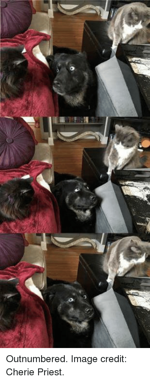 Cherie: Outnumbered.   Image credit: Cherie Priest.
