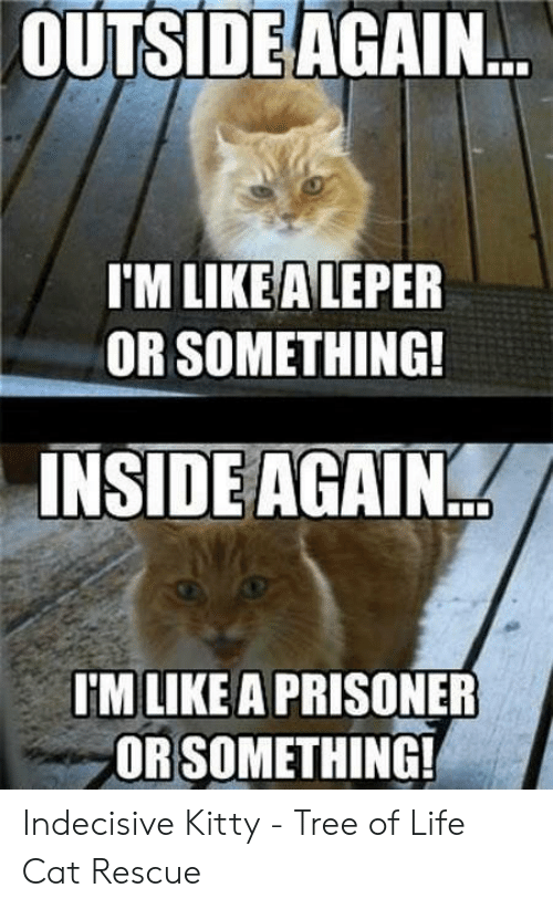 Indecisive Meme: OUTSIDE AGAIN...  I'M LIKEALEPER  OR SOMETHING!  INSIDE AGAIN  I'M LIKE A PRISONER  ORSOMETHING! Indecisive Kitty - Tree of Life Cat Rescue