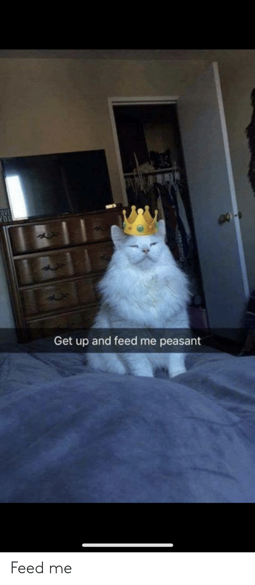 Peasant: OVE  YOU  Get up and feed me peasant Feed me