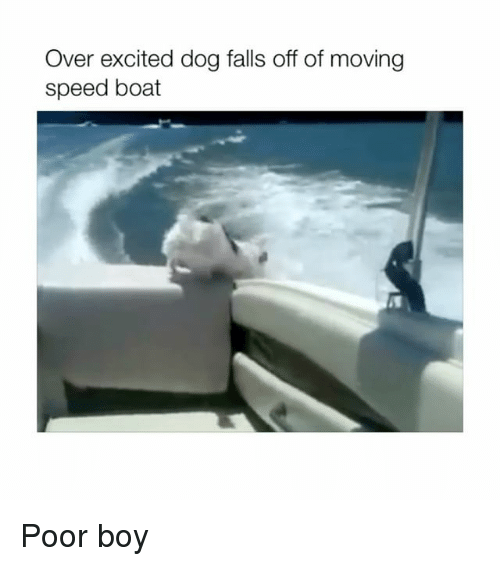 Boat, Boy, and Dog: Over excited dog falls off of moving  speed boat Poor boy