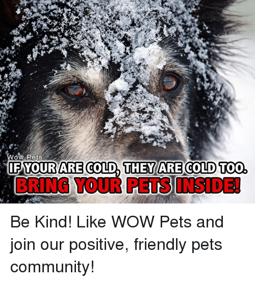 Memes, Being Kind, and 🤖: OW Pets  THEY ARE Too,  IF YOUR ARE  COLD COLD BRING TOUR PETS INSIDEI Be Kind! Like WOW Pets and join our positive, friendly pets community!