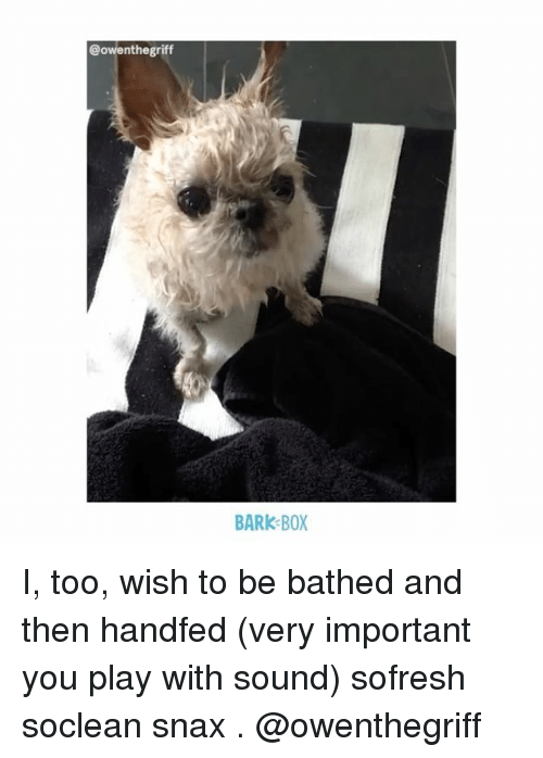 Importanter: @owenthegriff  BARK BOX I, too, wish to be bathed and then handfed (very important you play with sound) sofresh soclean snax . @owenthegriff
