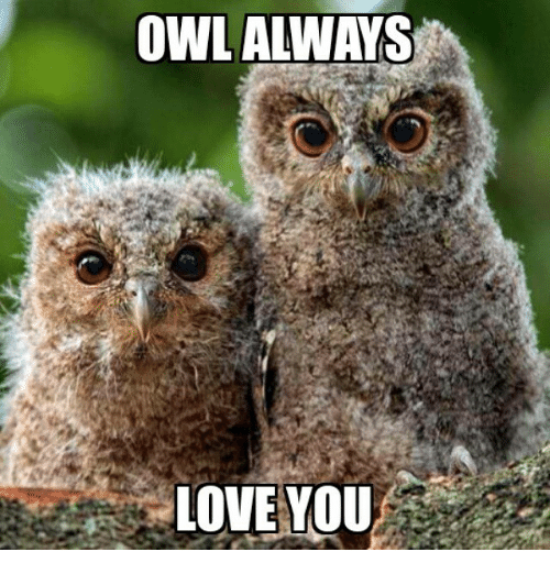 owl-always-love-you-2325458.png