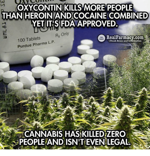 Cannabies: OXY CONTIN KILLS MORE PEOPLE  THAN HEROINLANDCOCAINE COMBINED  FDA  YET ITIS Rx Only  e Real Farmacy.com  100 Tablets  L. Purdue Pharma P  Fresh News and Information  CANNABIS HAS KILLEDZERO  PEOPLEAND ISN'T EVEN LEGAL