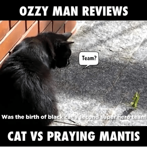 25 Best Memes About Praying Mantis Praying Mantis Memes : ozzy man reviews team was the birth of black cat 6790784 from onsizzle.com size 500 x 522 png 141kB