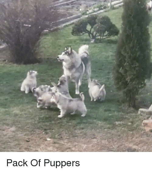 Pack and Puppers: Pack Of Puppers
