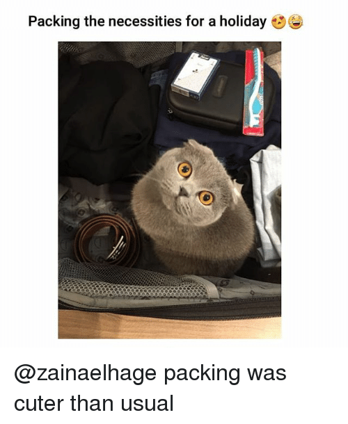 Memes, 🤖, and Holiday: Packing the necessities for a holiday @zainaelhage packing was cuter than usual