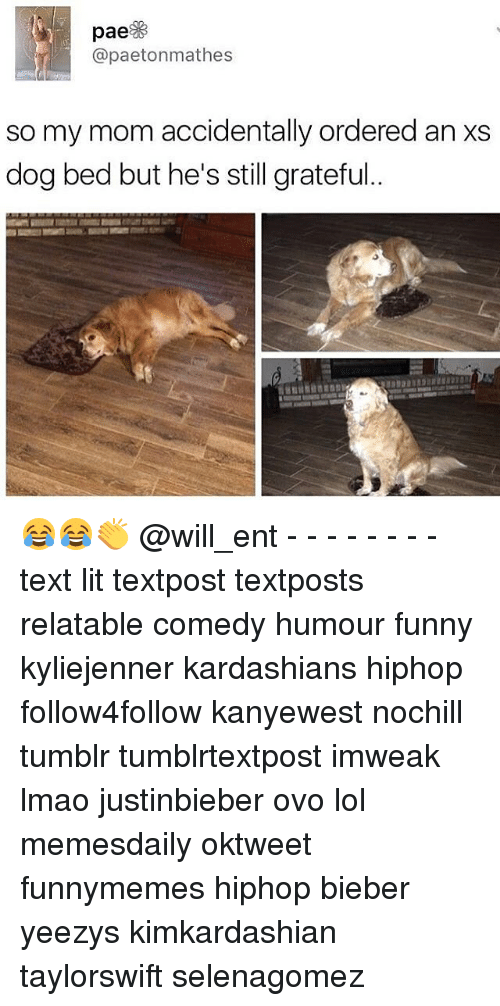 Funny, Kardashians, and Lit: pae  apaetonmathes  so my mom accidentally ordered an Xs  dog bed but he's still grateful 😂😂👏 @will_ent - - - - - - - - text lit textpost textposts relatable comedy humour funny kyliejenner kardashians hiphop follow4follow kanyewest nochill tumblr tumblrtextpost imweak lmao justinbieber ovo lol memesdaily oktweet funnymemes hiphop bieber yeezys kimkardashian taylorswift selenagomez