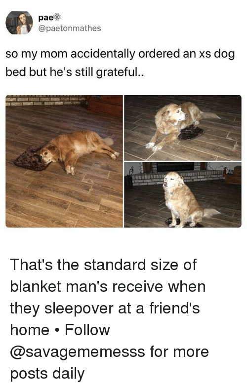 dog bed: pae  @paetonmathes  so my mom accidentally ordered an xs dog  bed but he's still grateful.. That's the standard size of blanket man's receive when they sleepover at a friend's home • Follow @savagememesss for more posts daily