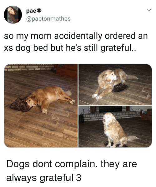 dog bed: pae  @paetonmathes  so my mom accidentally ordered an  xs dog bed but he's still grateful Dogs dont complain. they are always grateful 3
