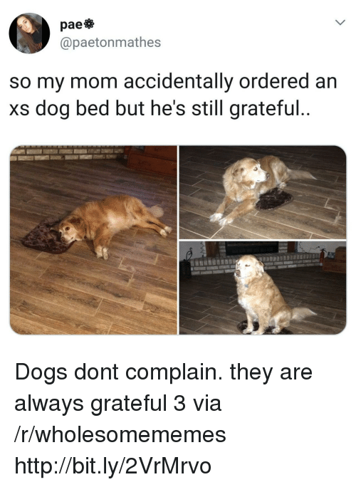 dog bed: pae  @paetonmathes  so my mom accidentally ordered an  xs dog bed but he's still grateful Dogs dont complain. they are always grateful 3 via /r/wholesomememes http://bit.ly/2VrMrvo