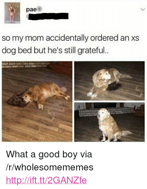 """dog bed: pae  so my mom accidentally ordered an xs  dog bed but he's still grateful <p>What a good boy via /r/wholesomememes <a href=""""http://ift.tt/2GANZfe"""">http://ift.tt/2GANZfe</a></p>"""