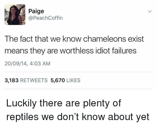Dank Memes, Idiot, and Don: Paige  @PeachCoffin  The fact that we know chameleons exist  means they are worthless idiot failures  20/09/14, 4:03 AM  3,183 RETWEETS 5,670 LIKES Luckily there are plenty of reptiles we don't know about yet
