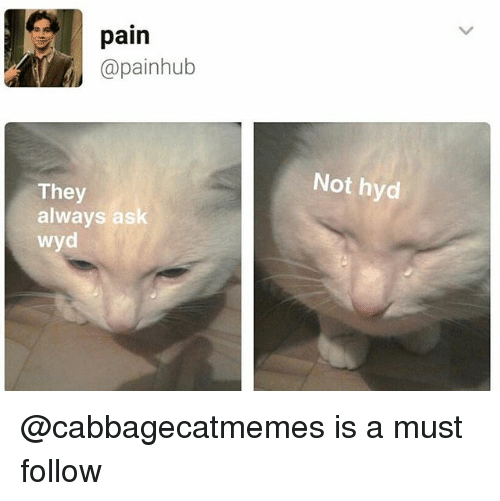 Wyd, Pain, and Trendy: pain  @painhub  They  always ask  wyd  Not hyd @cabbagecatmemes is a must follow