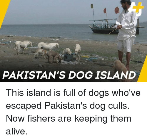 Alive, Dogs, and Memes: PAKISTAN'S DOG ISLAND This island is full of dogs who've escaped Pakistan's dog culls. Now fishers are keeping them alive.