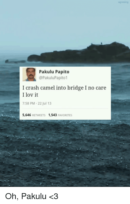 Pakulu Papito: Pakulu Papito  @Pakulu Papito  I crash camel into bridge Ino care  I lov it  7:58 PM 22 Jul 13  5,646  RETWEETS 1,543  FAVORITES Oh, Pakulu <3