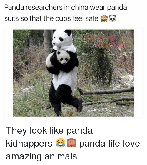 Animals, Life, and Love: Panda researchers in china wear panda  suits so that the cubs feel safe They look like panda kidnappers 😂🙈 panda life love amazing animals