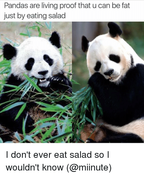 Eating Salad: Pandas are living proof that u can be fat  just by eating salad I don't ever eat salad so I wouldn't know (@miinute)