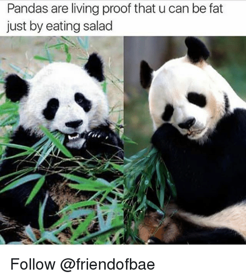 Eating Salad: Pandas are living proof that u can be fat  just by eating salad Follow @friendofbae