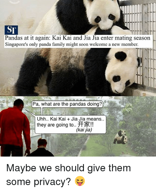 jia: Pandas at it again: Kai Kai and Jia Jia enter mating season  Singapore's only panda family might soon welcome a new member.  Pa, what are the pandas doing?  Uhh.. Kai Kai Jia Jia means..  they are going to.. HR!!  (kai jia) Maybe we should give them some privacy? 😝