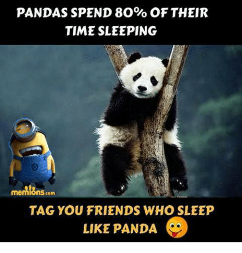 Friends, Memes, and Panda: PANDAS SPEND 80% OF THEIR  TIME SLEEPING  mennions com  TAG YOU FRIENDS WHO SLEEP  LIKE PANDA