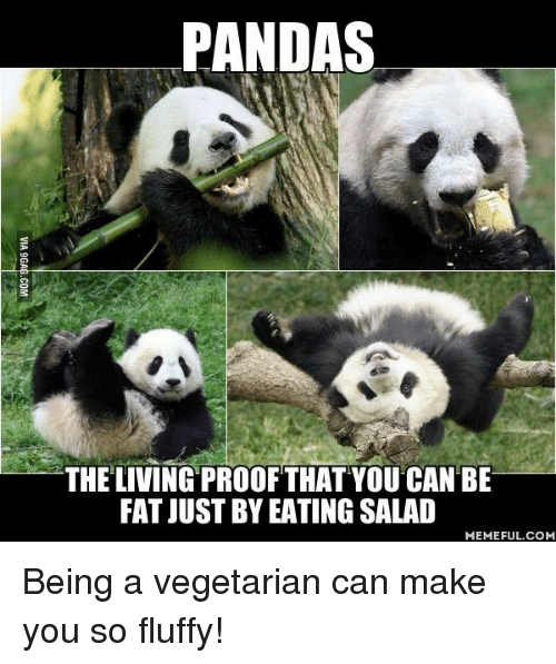 Eating Salad: PANDAS  THE LIVING PROOF THAT YOU CAN BE  FAT JUST BY EATING SALAD  MEMEFUL COM Being a vegetarian can make you so fluffy!
