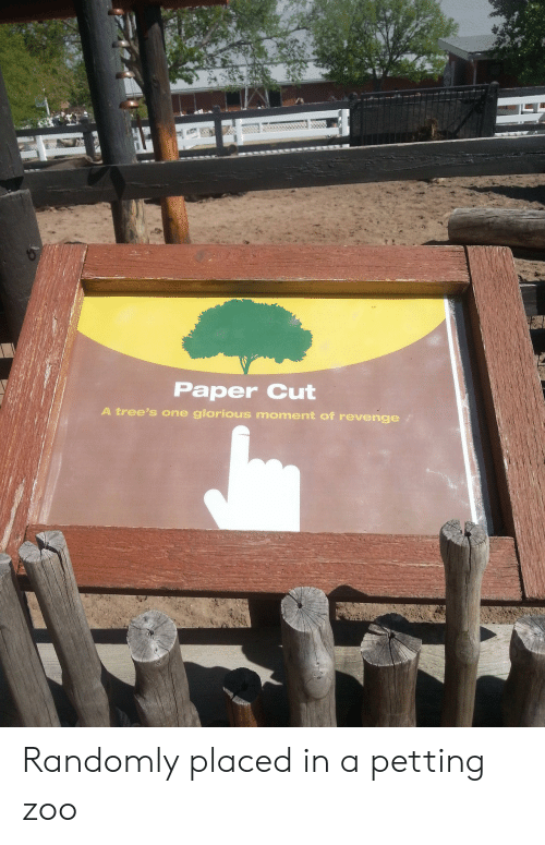 petting zoo: Paper Cut  A tree's one glorious moment of revenge Randomly placed in a petting zoo