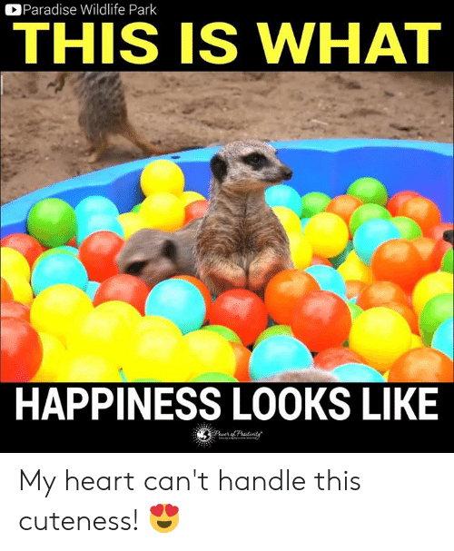 Cant Handle This: Paradise Wildlife Park  THIS IS WHAT  HAPPINESS LOOKS LIKE My heart can't handle this cuteness! 😍