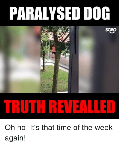 Memes, Time, and Truth: PARALYSED DO  SCAG  TRUTH REVEALLED Oh no! It's that time of the week again!