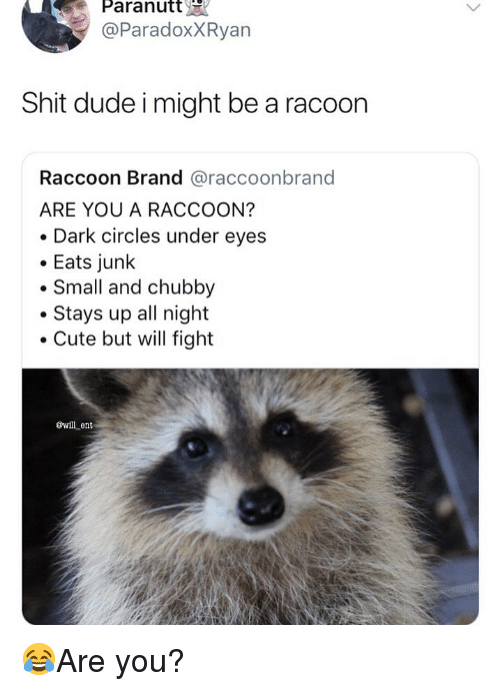 chubby: Paranutt  @ParadoxXRyan  Shit dude i might be a racoon  Raccoon Brand @raccoonbrand  ARE YOU A RACCOON?  Dark circles under eyes  Eats junlk  Small and chubby  Stays up all night  Cute but will fight  øwll ent 😂Are you?