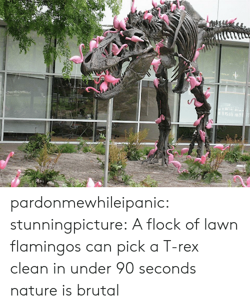t rex: pardonmewhileipanic: stunningpicture:  A flock of lawn flamingos can pick a T-rex clean in under 90 seconds  nature is brutal