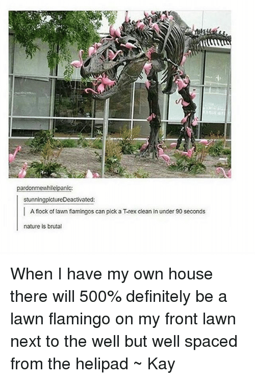 Definitely, Tumblr, and Definition: pardonmewhileipanic:  stunningpictureDeactivated:  I A flock of lawn flamingos can pick a T-rex clean in under 90 seconds  nature is brutal When I have my own house there will 500% definitely be a lawn flamingo on my front lawn next to the well but well spaced from the helipad ~ Kay