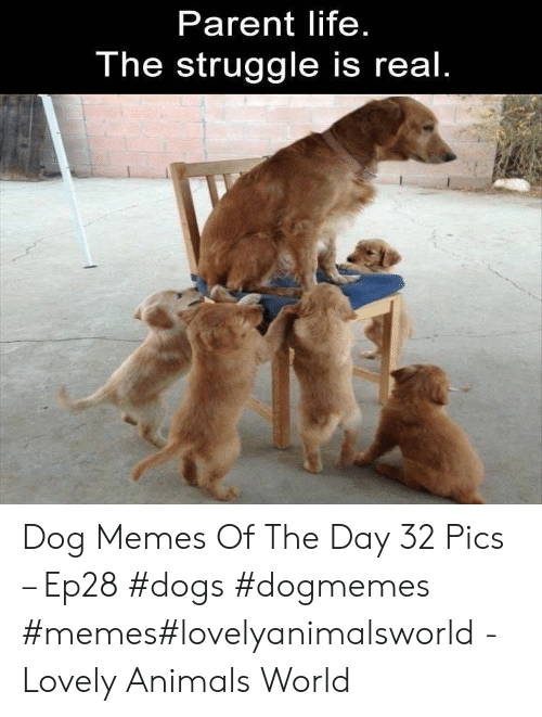 The Struggle is Real: Parent life  The struggle is real Dog Memes Of The Day 32 Pics – Ep28 #dogs #dogmemes #memes#lovelyanimalsworld - Lovely Animals World